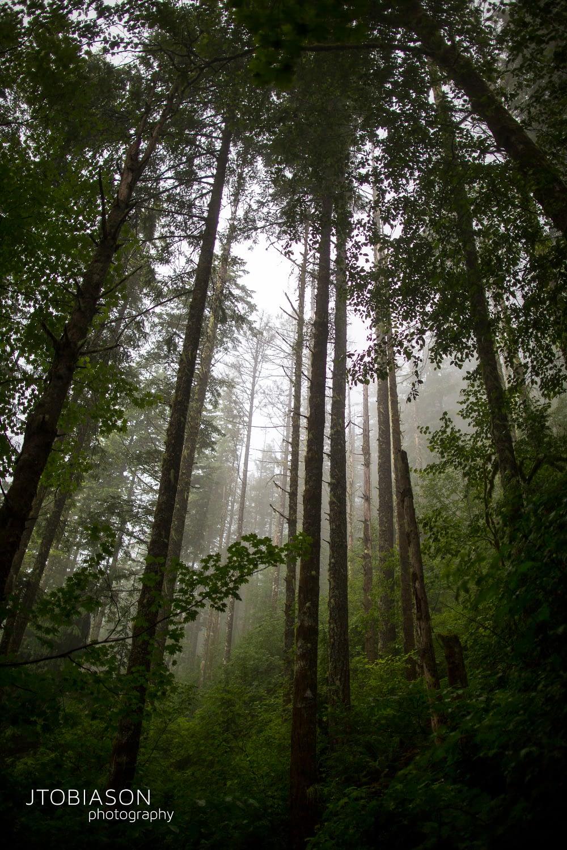 Moody Forrest Cascades